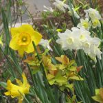 Easter Craft Ideas with Easter Lillies